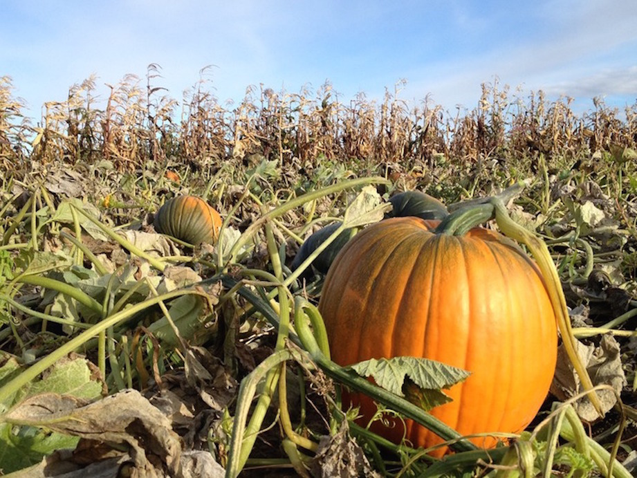 Fort Collins Pumpkin Patches